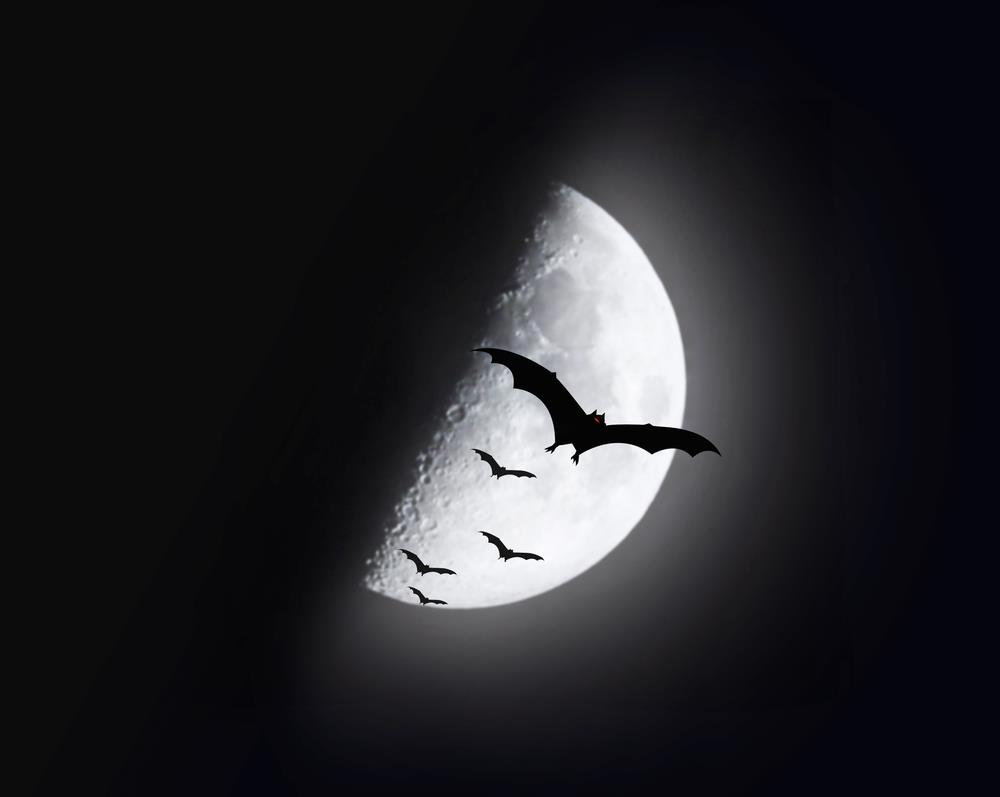 Infestação de morcegos: como se livrar