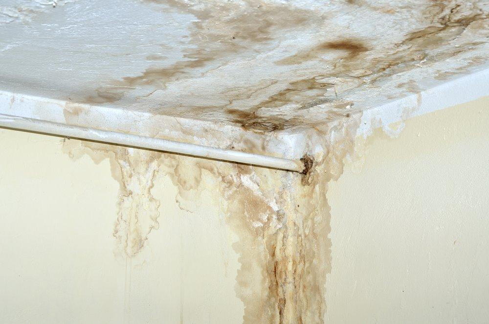 Perigos da umidade e do mofo para a saúde
